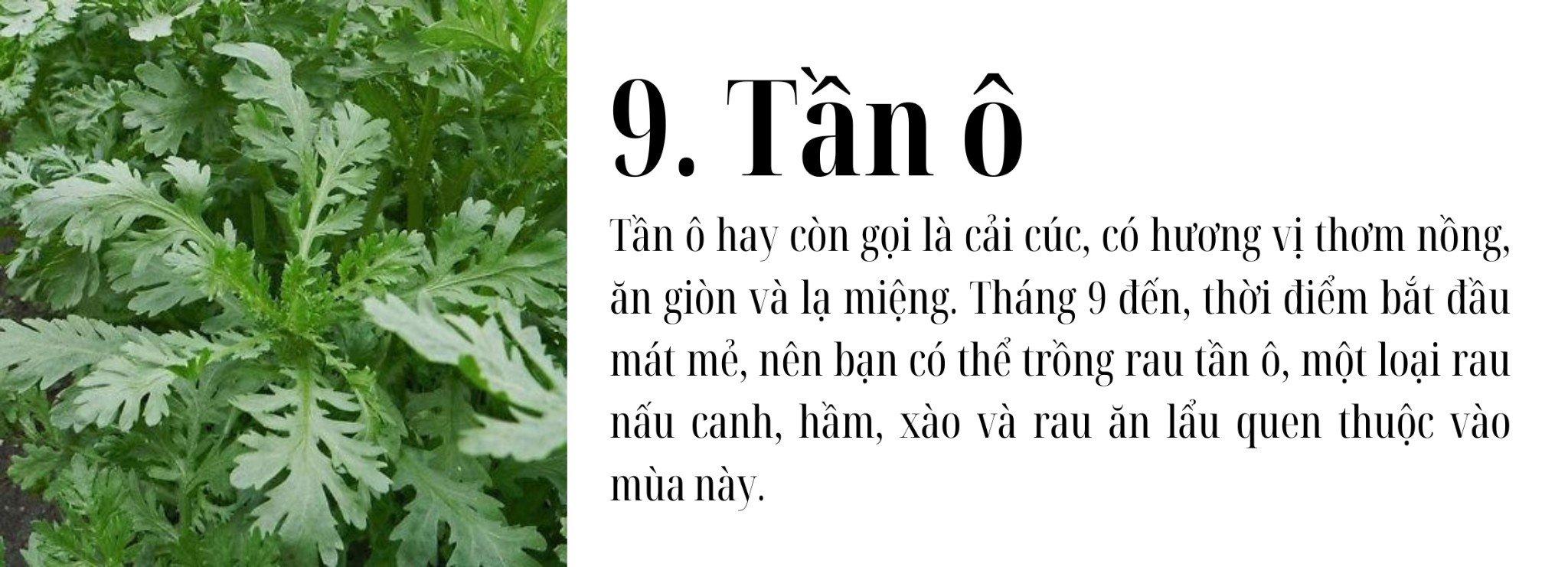 thang-9-trong-rau-gi