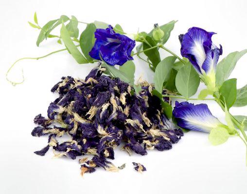 trà hoa đậu biếc
