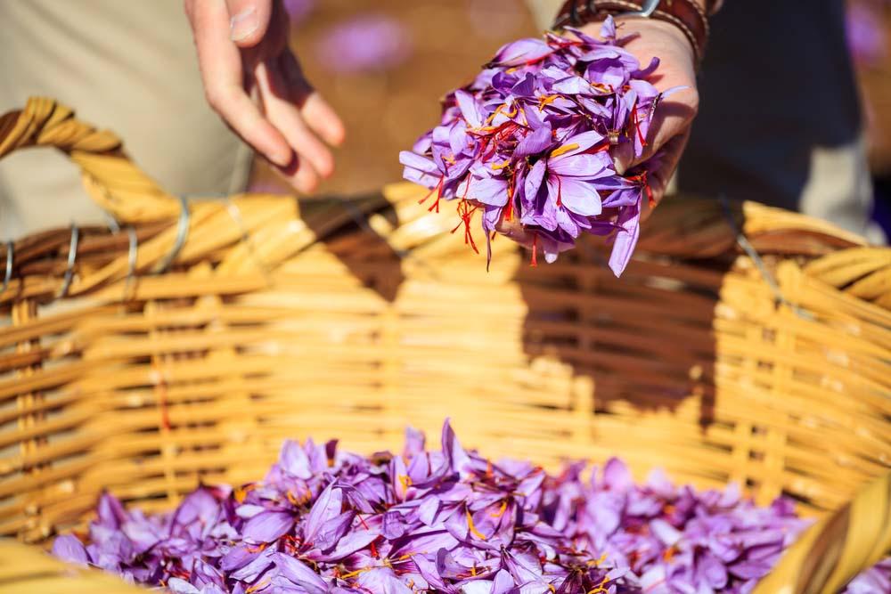 Nhụy hoa nghệ tây có gì mà được chị em tin dùng đến thế