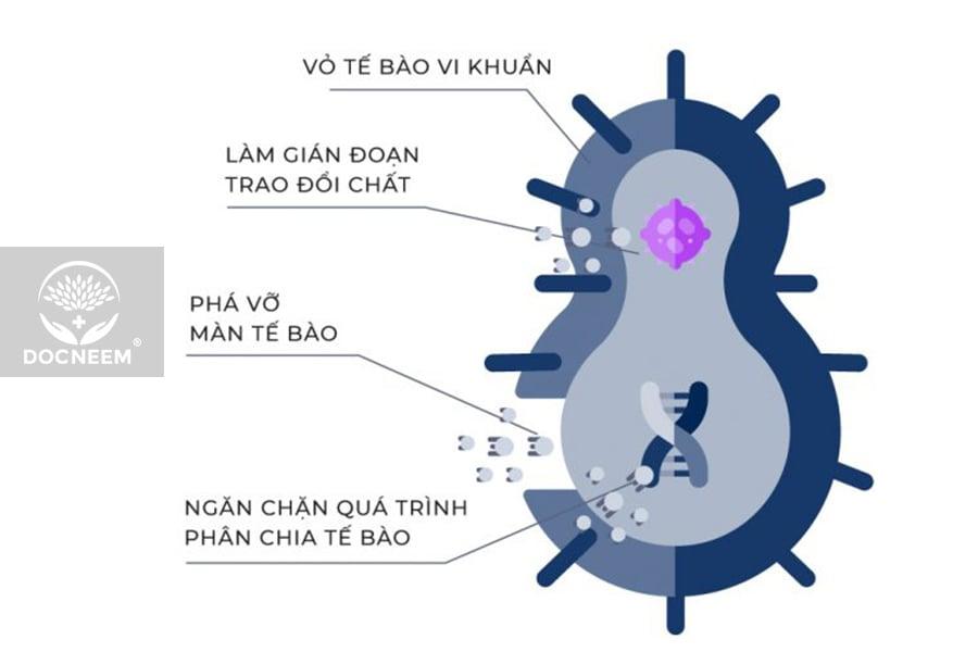 2-co-che-tac-dong-nano-bac-nguyen-chat-docneem