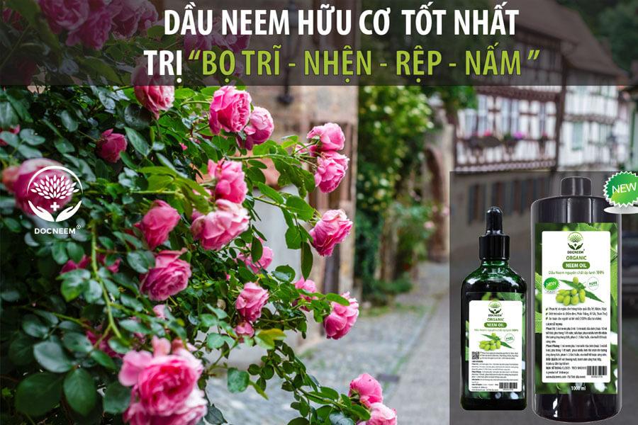 Dầu Neem nguyên chất trị sâu bệnh trên hoa hồng, an toàn, hiệu quả