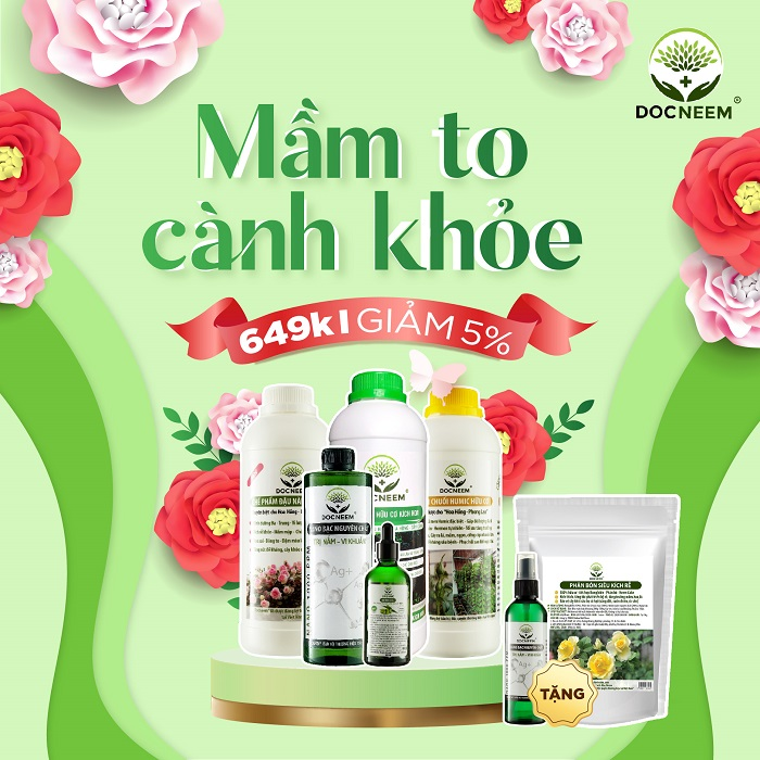 combo-mam-to-canh-khoe-docneem