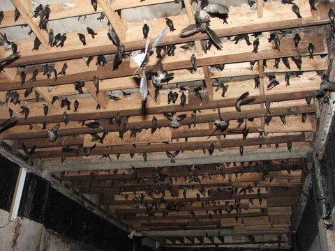 Bloomberg - Vietnam seeks millions for edible bird spit industry
