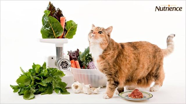 Công thức nuôi mèo béo ai cũng nên biết