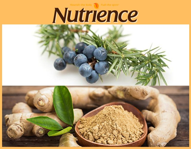 Nutrience spirit