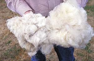 lông cừu dệt chăn vải len