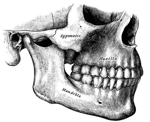 4 khớp liên kết xương gò má Zygomatic