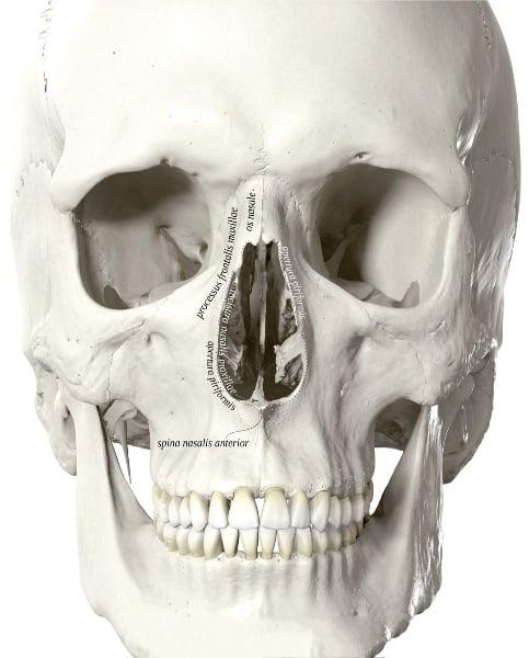 Khoang mũi