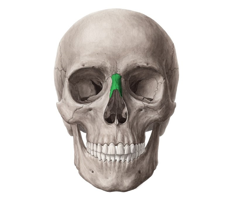 Giải phẫu chi tiết xương mũi