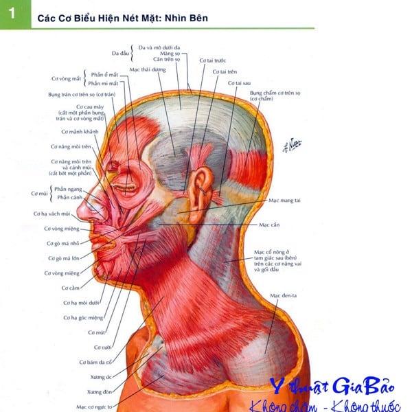 Hình ảnh giải phẫu chi tiết