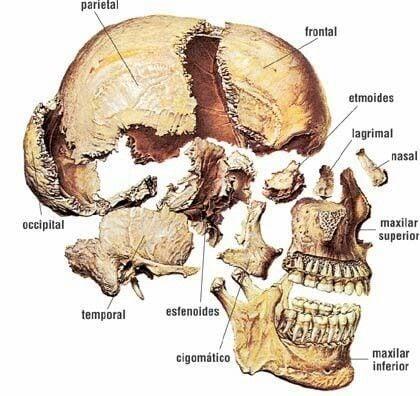 giải phẫu xương sọ