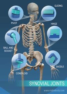 306 khớp xương