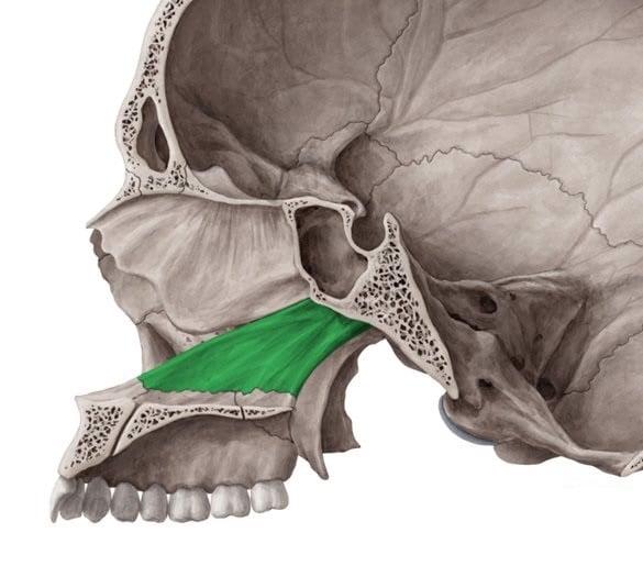 giải phẫu xương mặt