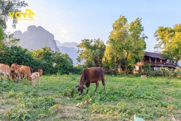 Khô bò Lào tự nhiên