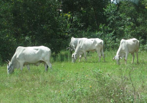 Khô bò miếng Campuchia tự nhiên