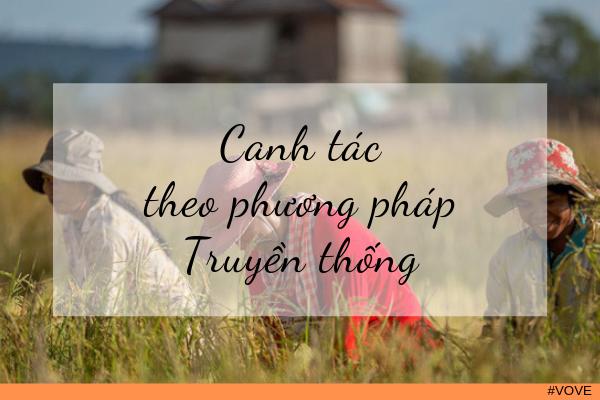 Tìm hiểu về quy trình canh tác gạo hữu cơ Campuchia
