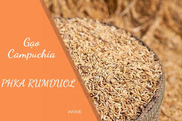 Tại sao gạo Campuchia được người Việt ưa chuộng