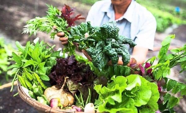 Lợi ích của nền nông nghiệp hữu cơ