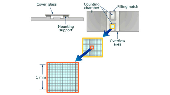 Buồng đếm tế bào Neubauer - Cách sử dụng và cấu tạo