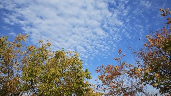 女心と秋の空