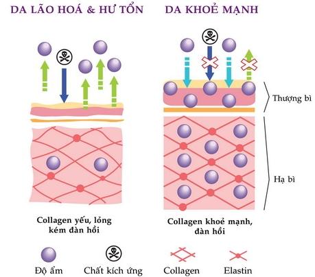 công dụng collagen-collagen beauty doppelherz