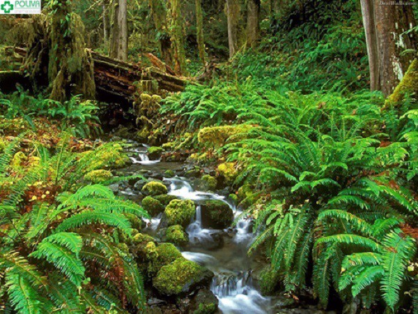 hạt kiểm lâm vườn quốc gia Tam Đảo