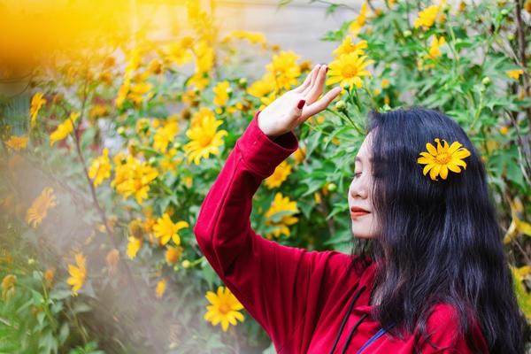 hoa dã quỳ nở rộ tại Đà Lạt