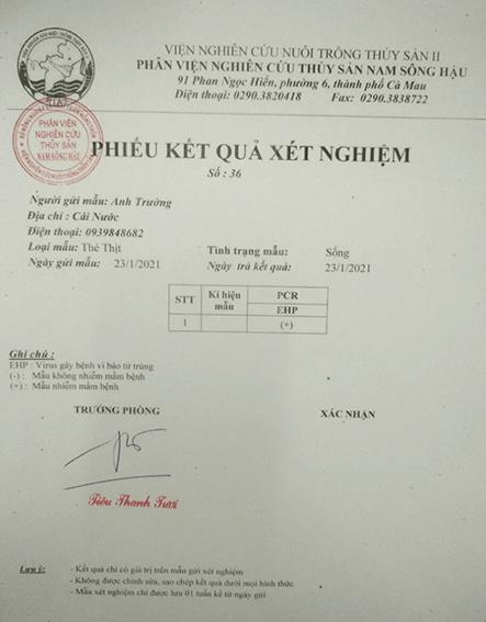 Kết quả xét nghiệm PCR trên mẫu tôm ao 2  ngày 23/01/2021 cho kết quả tôm bị EHP