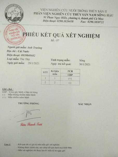 Kết quả xét nghiệm PCR trên mẫu tôm ao 1 và ao 2 ngày 29/01/2021 cho kết quả tôm ao 2 khỏi bệnh EHP