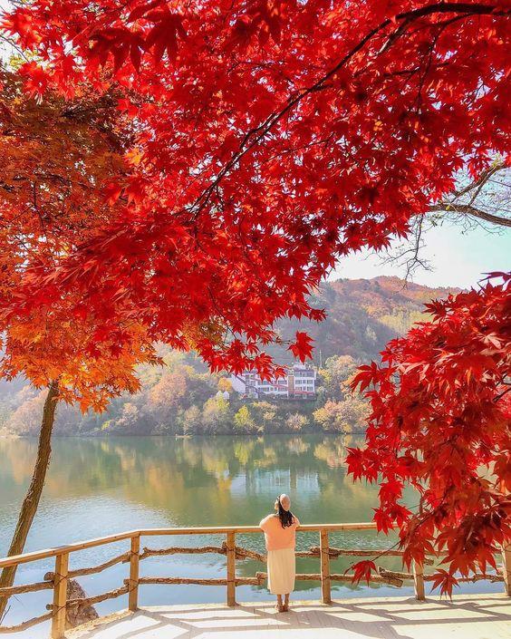 Tin mới nhất: Hàn Quốc miễn lệ phí xin visa cho công dân Việt Nam