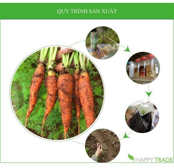product_process_of_fresh_carrot