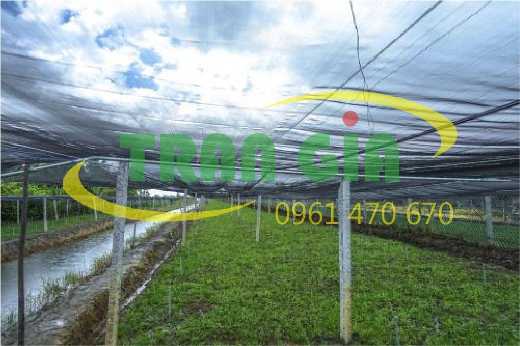 Các mô hình nhà lưới trồng rau sạch