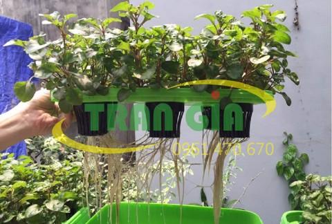 Tìm hiểu về dung dịch trồng rau thủy canh