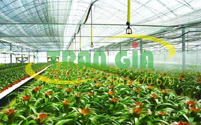 Nên chọn nhà lưới hay nhà màng để trồng rau?