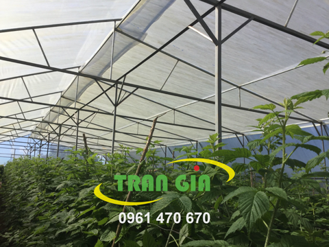 Lợi ích khi sử dụng nhà lưới để trồng rau