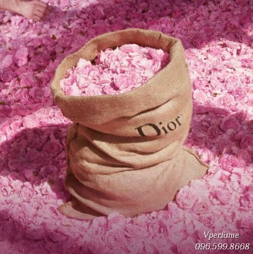 hương hoa hồng nổi tiếng từ Đan Mạch
