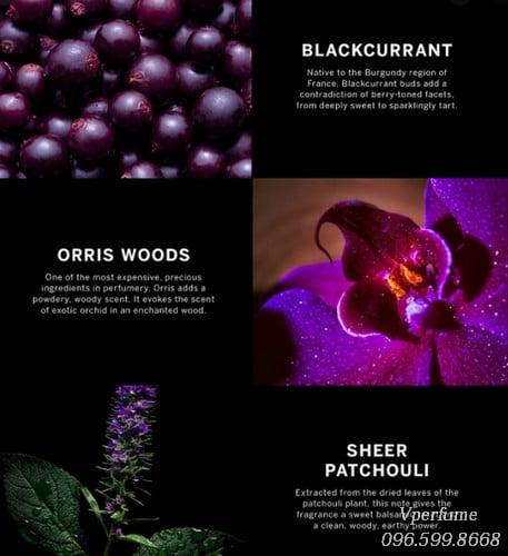 Mô tả mùi hương Very Sexy Orchid EDP