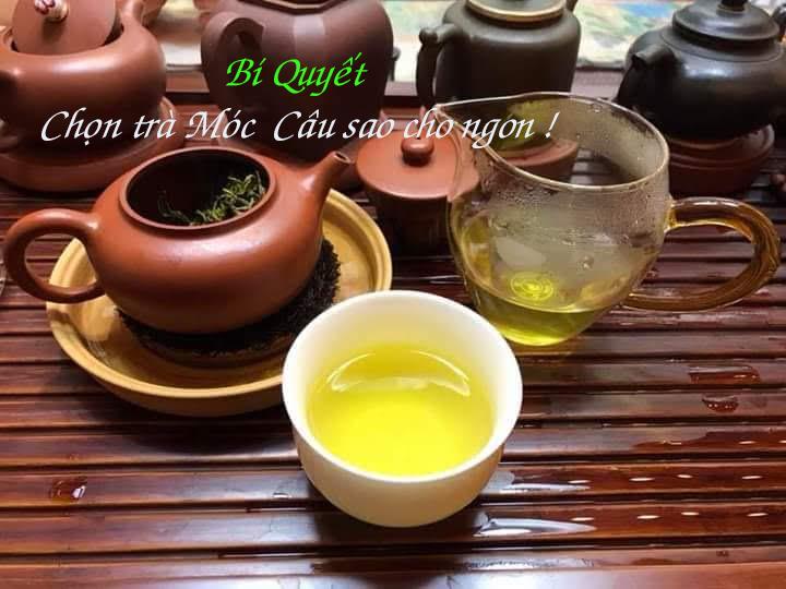 Cách lựa chọn trà móc câu Thái Nguyên ngon