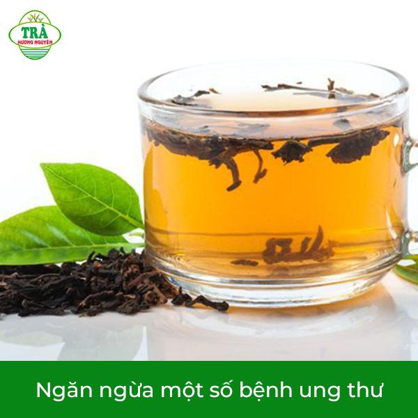 trà móc câu ngăn ngừa một số bệnh ung thư