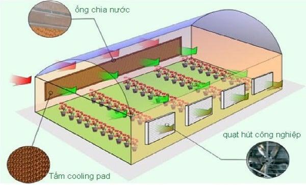 Sử dụng quạt hơi nước công nghiệp hoặc tấm làm mát cooling pad