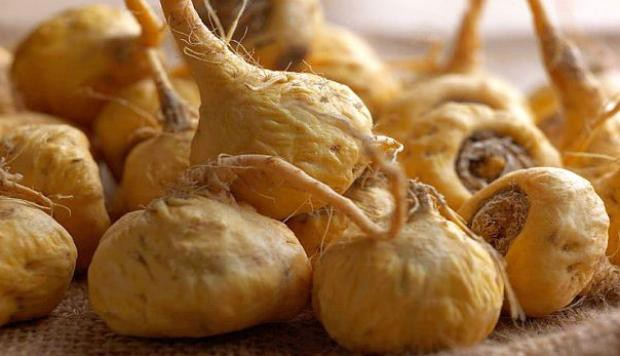 What are the benefits of maca root?
