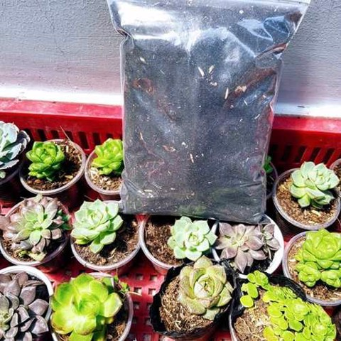 HOW TO PACKING PLANTS?