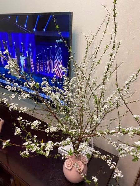 Hoa Tuyết Mai Trắng