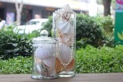 vỏ ốc biển trang trí