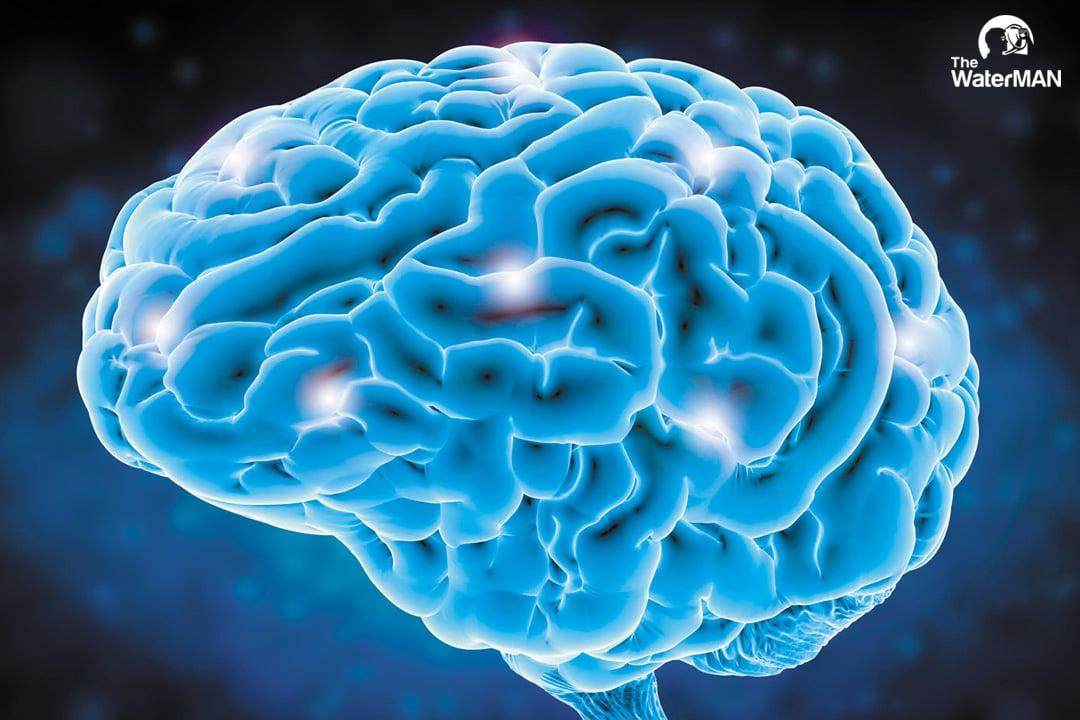 Hơn 60% não bộ là nước
