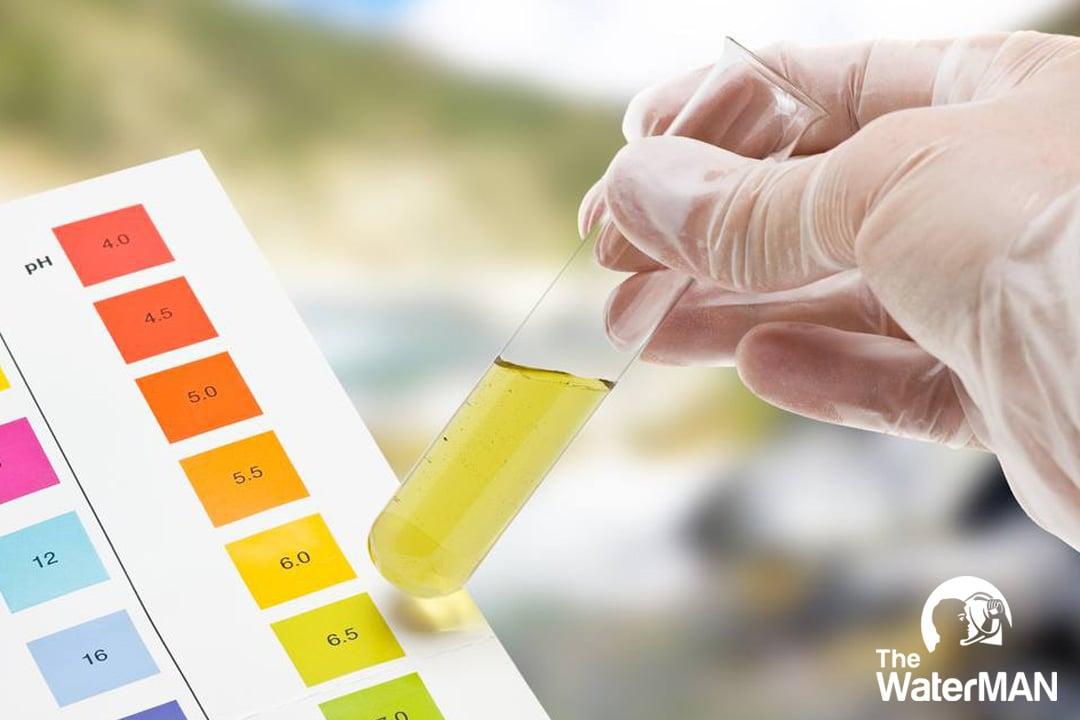 Nên thường xuyên kiểm tra nồng độ pH trong nước