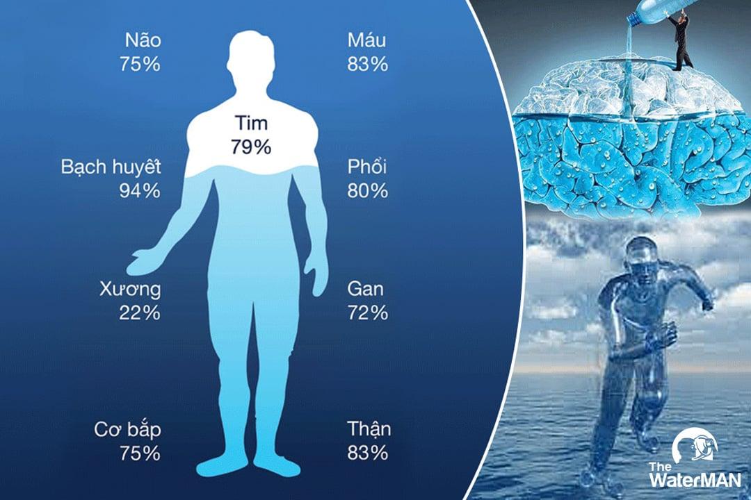 Nước có mặt trong mọi bộ phận của cơ thể