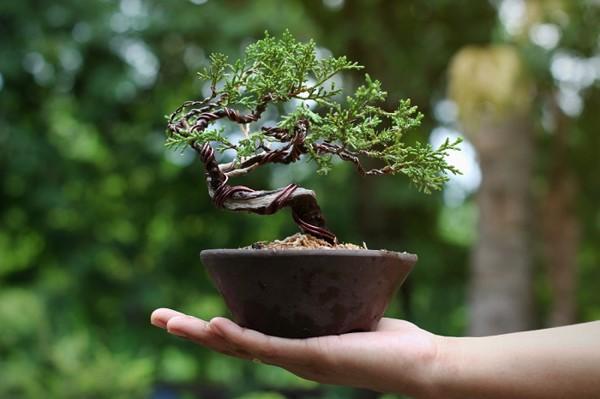 Những món quà mang nét văn hóa truyền thống rất được người Hàn trân quý
