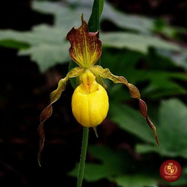 những loài hoa kì lạ nhất trên thế giới