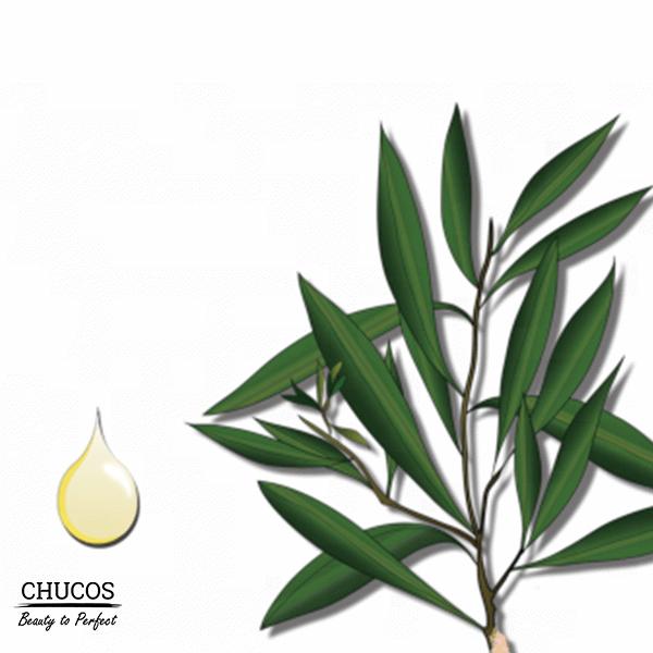 tea-tree-oil-va-cong-dung-cua-no-7